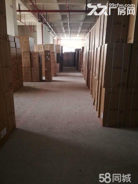 回兴园区一楼2000平仓库出租面积可分-图(4)