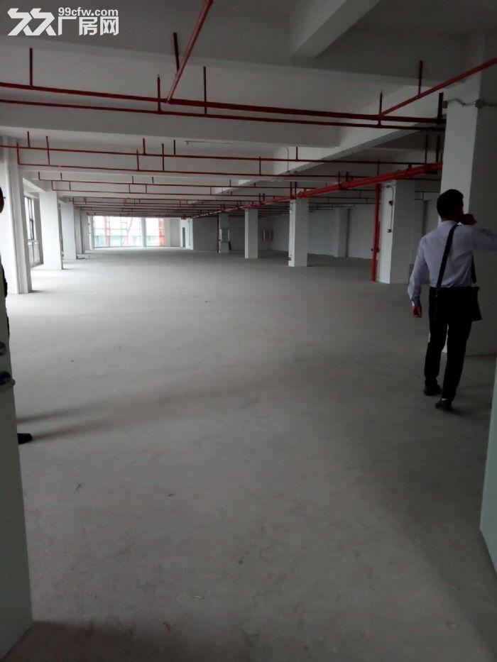 独门独院电梯5楼厂房出租-图(3)