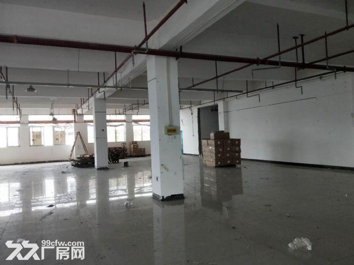 翔安火炬园二期标准厂房出租1200平-图(1)
