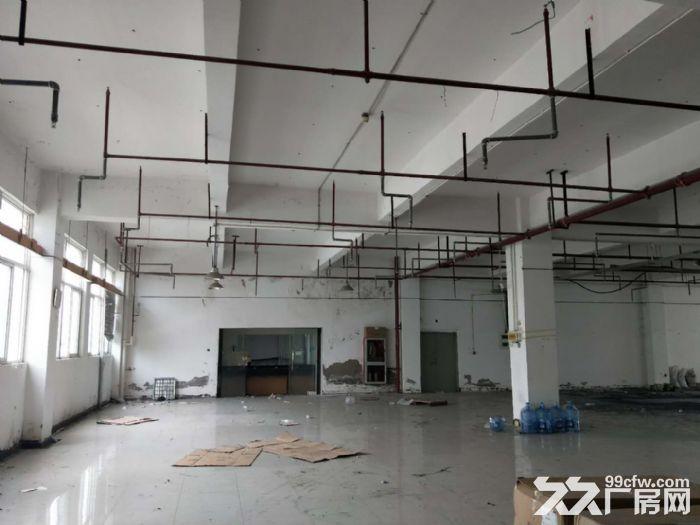 翔安火炬园二期标准厂房出租1200平-图(4)