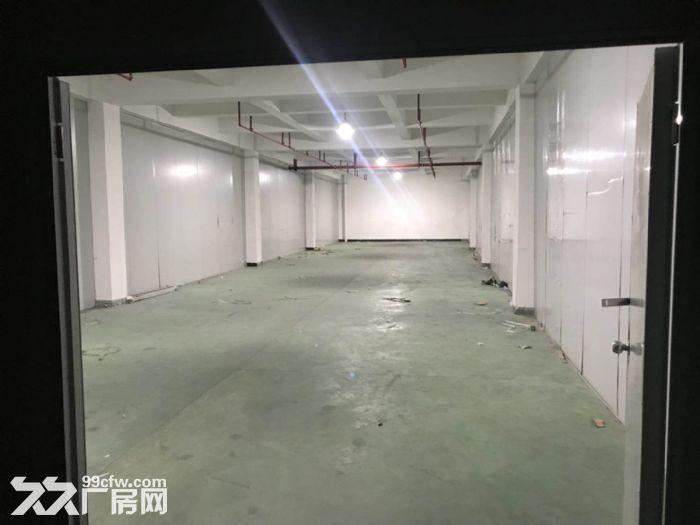 直租香洲南屏550平方仓库(已装修,有货梯)-图(2)