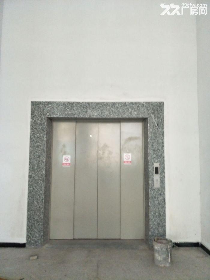 藤桥标准厂房1800平方,1000平方,800平方出租-图(4)