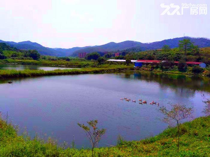 从化区鳌头龙潭770亩山地果园鱼塘养殖场出租-图(4)