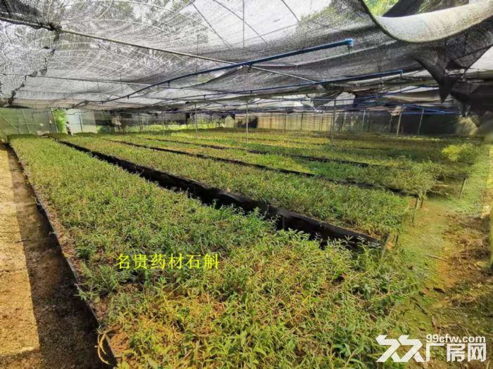 从化区太平镇银林400亩平山地果园鱼塘楼房农庄转让-图(6)