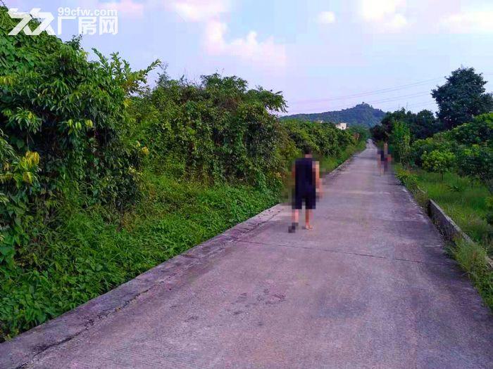从化区太平镇神棋公路附近银林村道边1亩平地果园转让-图(1)