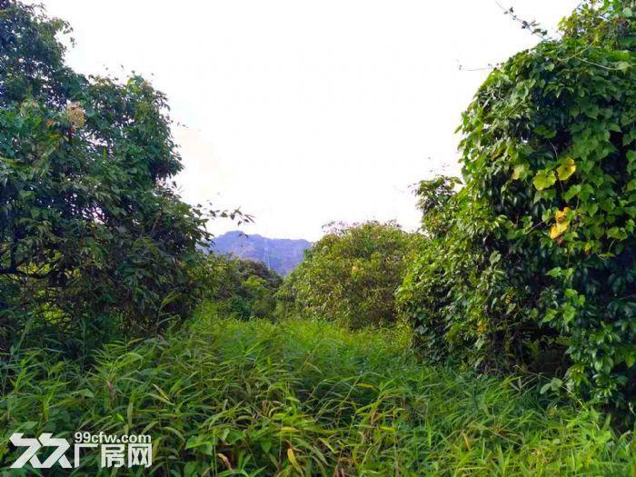 从化区太平镇神棋公路附近银林村道边1亩平地果园转让-图(2)