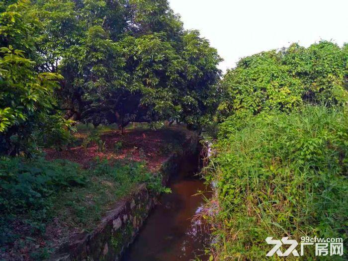 从化区太平镇神棋公路附近银林村道边1亩平地果园转让-图(4)