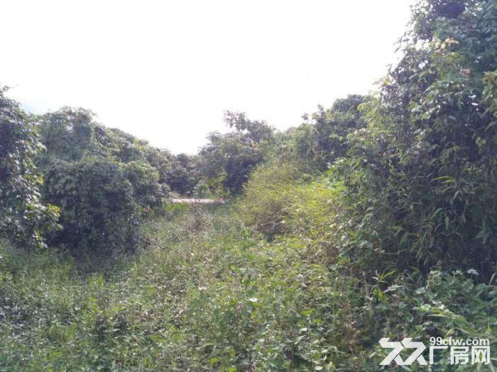 从化区太平镇神棋公路附近银林村道边1亩平地果园转让-图(6)