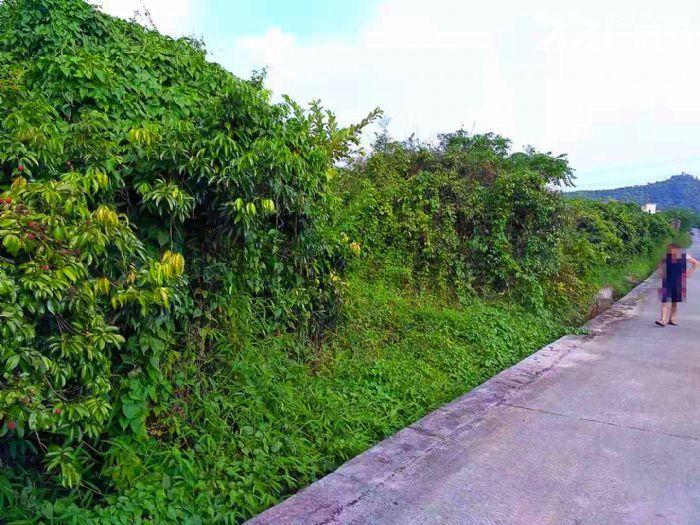 从化区太平镇神棋公路附近银林村道边1亩平地果园转让-图(8)