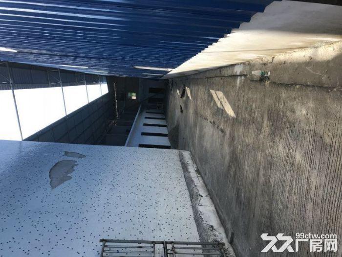 全新厂房1200方高8米15元(世联行不收费)-图(5)