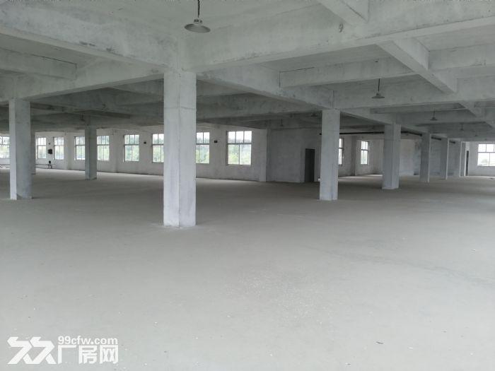 临港区花果山路全新厂房出租-图(5)
