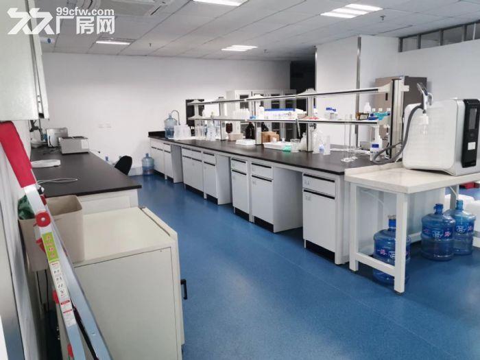 请注意,我是招商直租,张江药谷内精装修研发生物医药研发楼650平出租-图(3)