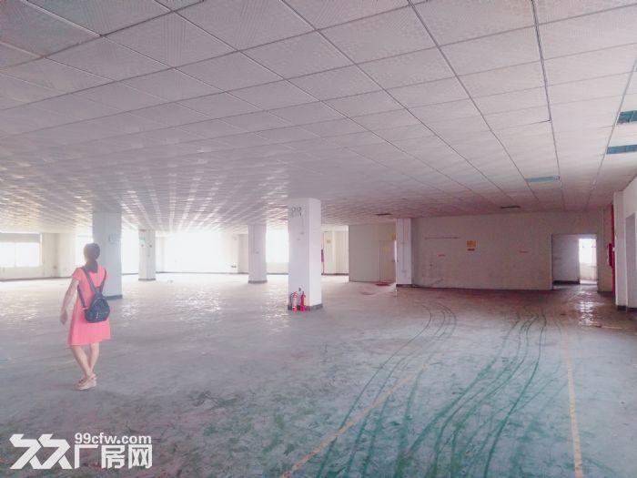 南屏科技园920平方一楼厂房,带装修拎包入驻-图(4)