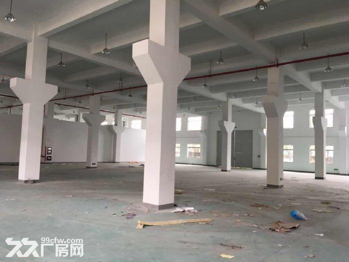 一手房东渭塘新建独栋7000平方厂房层高8米可架行出-图(4)