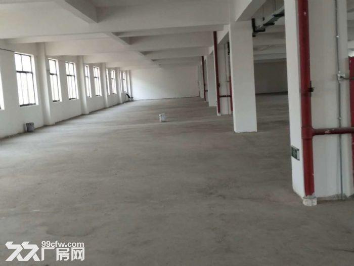 联港路1200平二楼标准厂房出租有货梯+环境好+位置好-图(3)