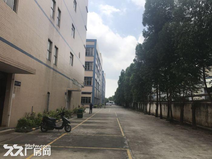 新塘32600平方(可分租)标准厂房招租-图(2)