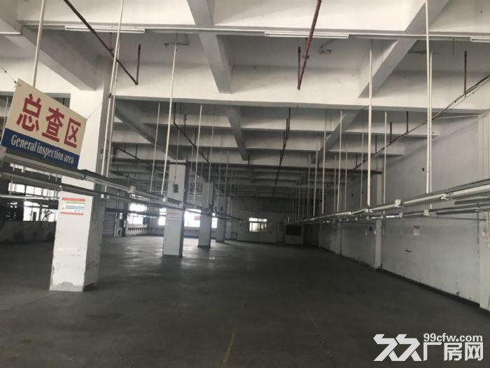新塘32600平方(可分租)标准厂房招租-图(3)