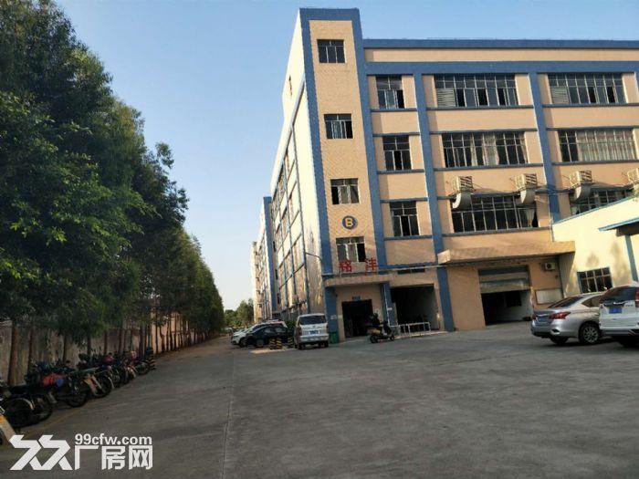 新塘32600平方(可分租)标准厂房招租-图(5)