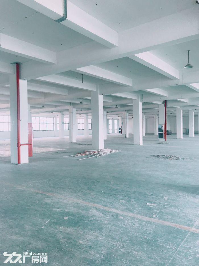 闻堰单层1400方标准厂房,适合淘宝仓库直接拎包-图(3)