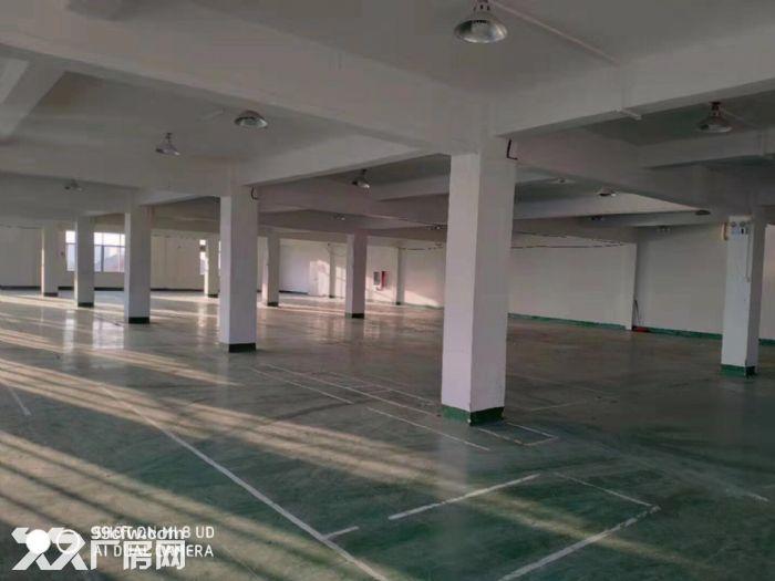 闻堰单层1400方标准厂房,适合淘宝仓库直接拎包-图(6)