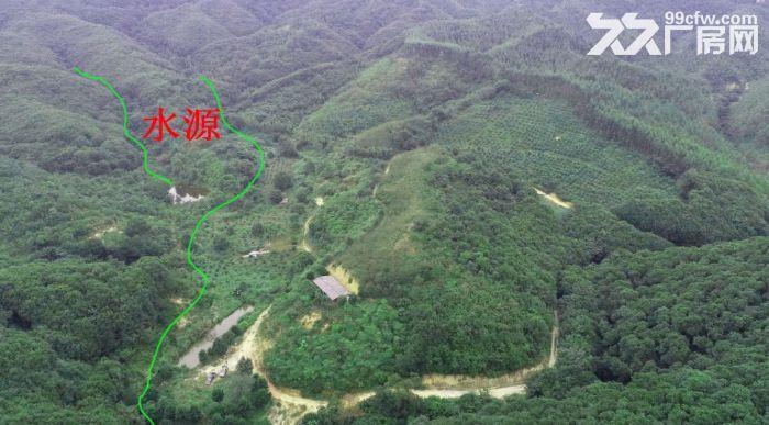 广州从化区龙潭水库旁140亩山地林出售-图(1)