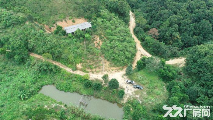 广州从化区龙潭水库旁140亩山地林出售-图(8)