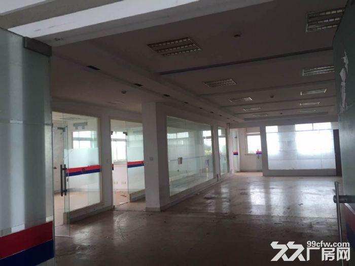底楼层高6米!张江1500平米可分割可环评厂房仓库-图(3)