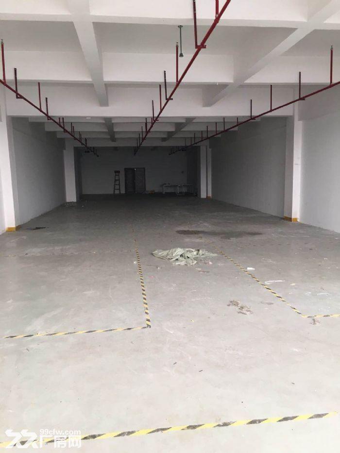 大港104板块1300平仓库出租,环.评已办好-图(1)