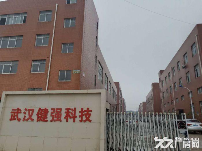 武汉阳逻经济开发区2000平米独栋钢构厂房出售-图(2)