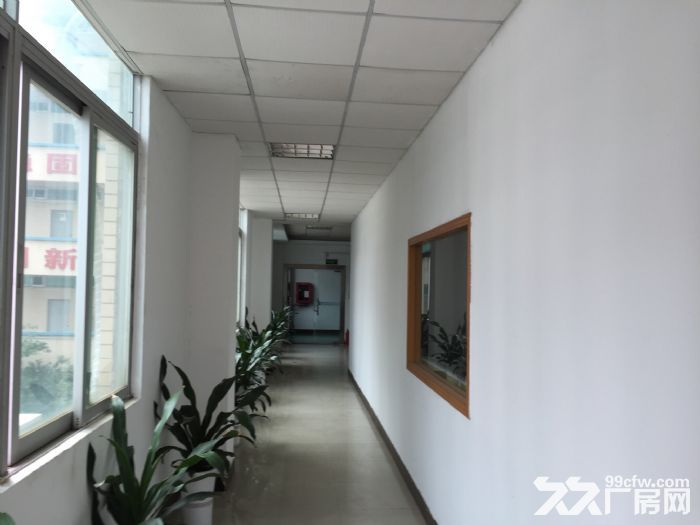 龙岗独院厂房南联地铁站3000平米业主直租-图(2)