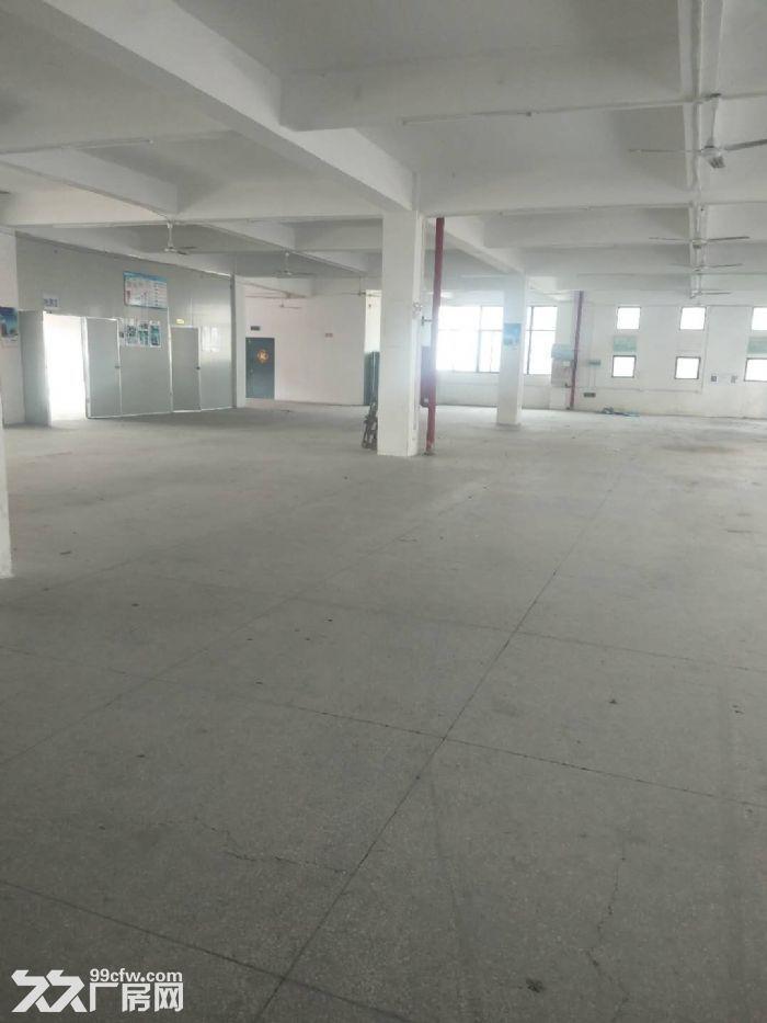 东浮独栋标准厂房7300平出租,性价比高-图(4)