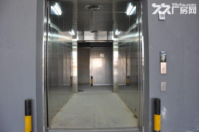大型土建干仓层高8米配备专业货梯和月台火热招租-图(2)