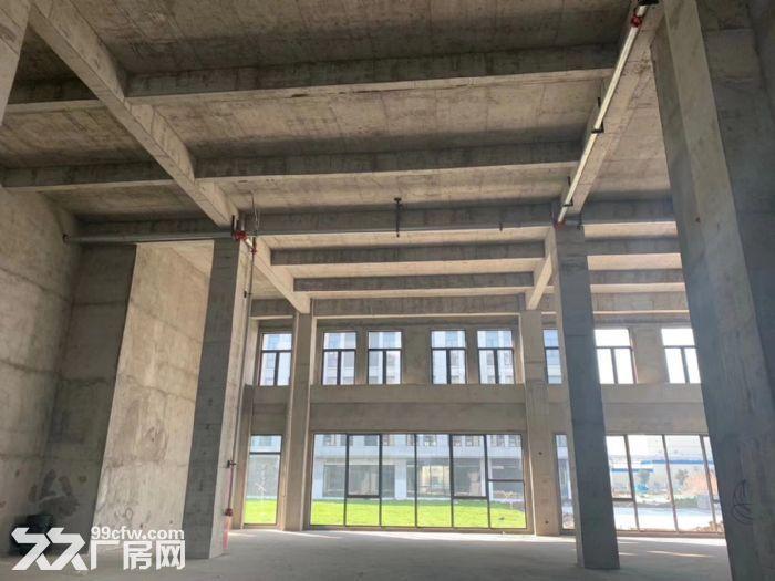 金桥开发区1500平独栋厂房50年产权-图(5)