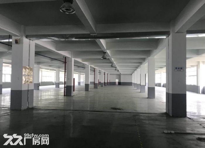 广州金沙洲700方标准厂房出租,水电齐全,地坪漆-图(3)