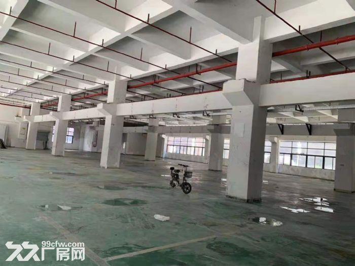 凤岗竹塘标准一楼带牛角高6.5米带装修厂房出租2600平-图(3)