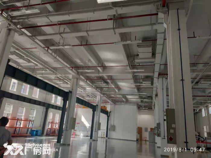 标准化厂房出售50年独立产权火热招商-图(4)