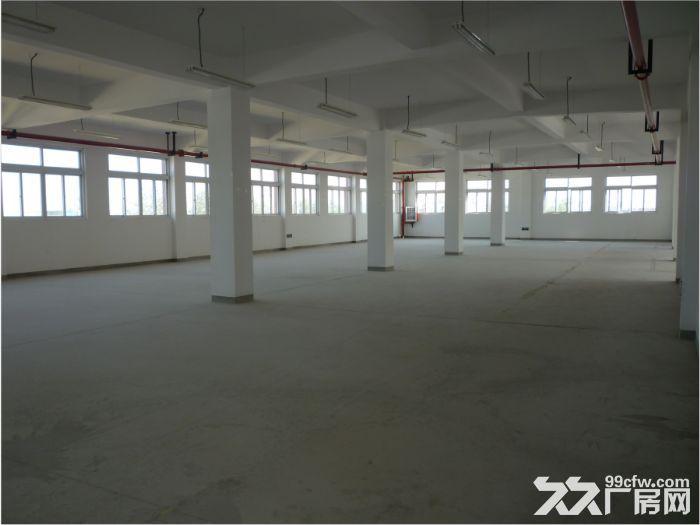 宝山罗店标准厂房出租1150平方104地块自有厂房-图(3)