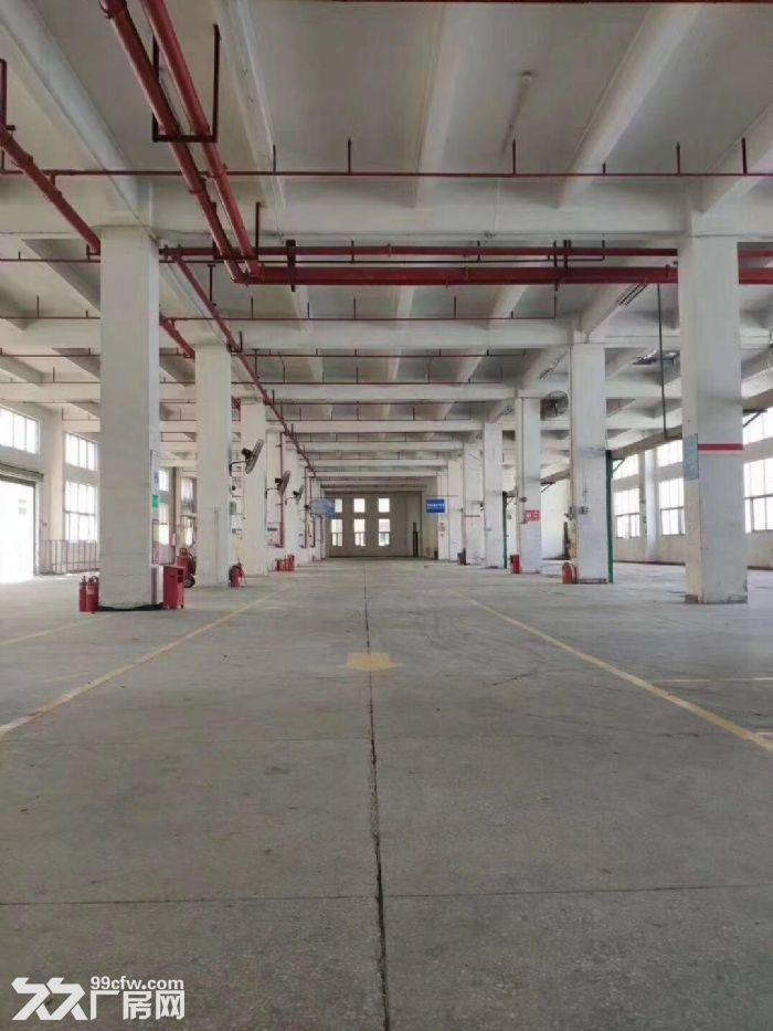 出租观澜街道汽车站旁红本厂房6000平,交通便利空地面积大-图(4)
