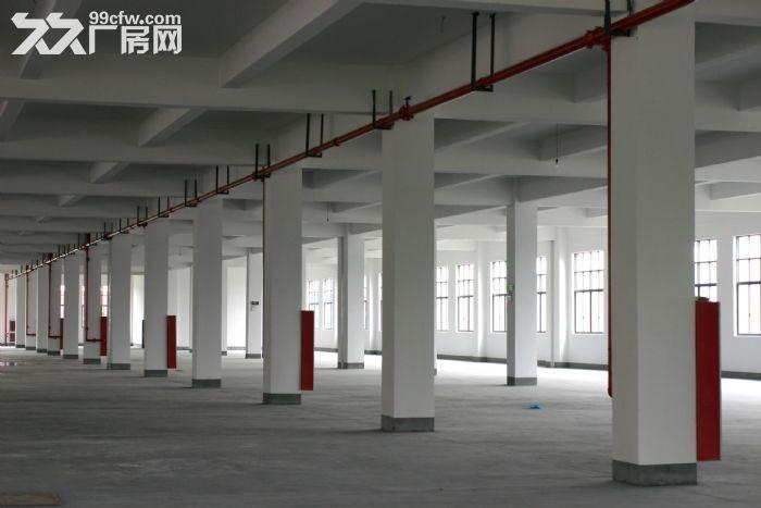 出租厂房上海松江区泗泾开发区104板块标准厂房三层12600平方证齐全-图(5)