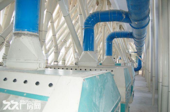 400吨自动化小麦粉加工厂整体出租或出售-图(6)