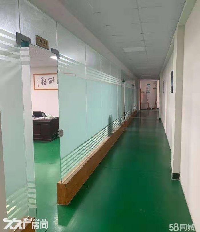 新会区睦洲工业区新出楼上800方标准厂房精装修带办公室-图(4)