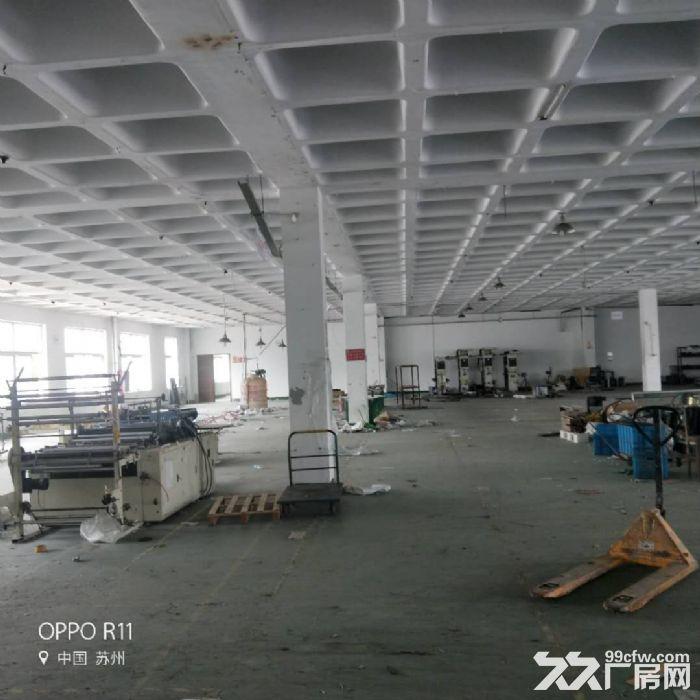 浒墅关浒杨路2600平独栋厂房环氧地坪环境好交通方便-图(4)