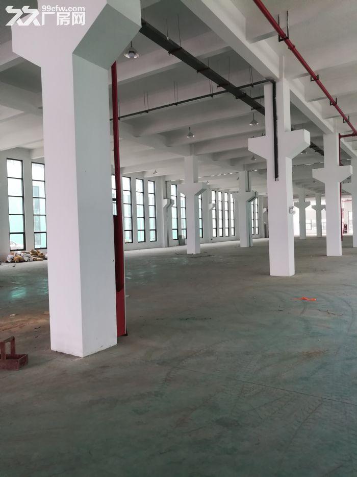 新区独栋双层厂房3800平出租-图(1)