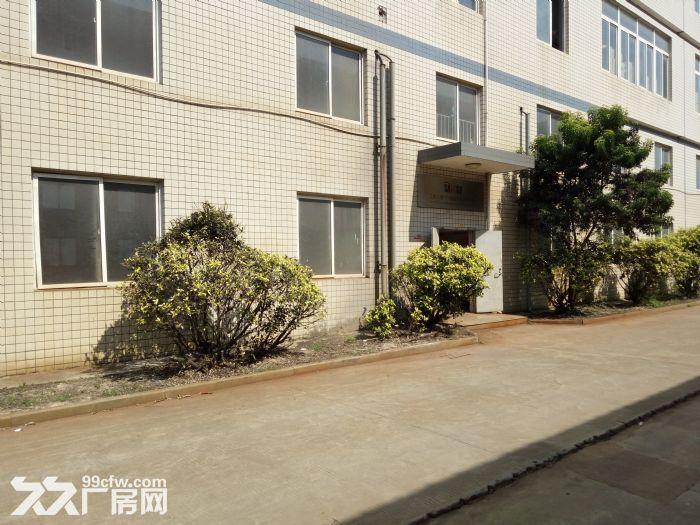 巷北工业区1楼700平出租-图(2)