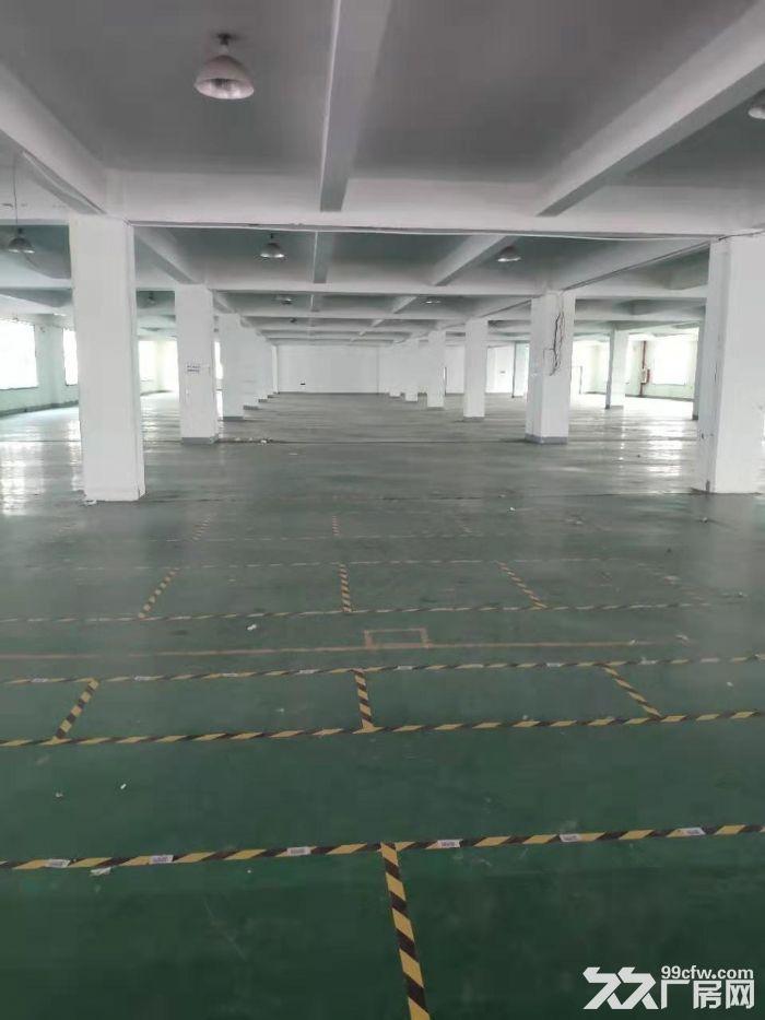 新桥新庙三路工业区1250平方一楼高标准高8米厂房仓库出租,104地块证件齐全,-图(3)