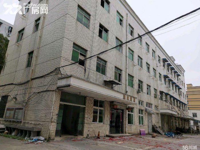 文昌路8400方两栋一楼店面位置好宜各行业需要-图(3)