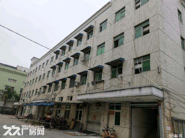 文昌路8400方两栋一楼店面位置好宜各行业需要-图(4)