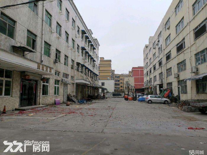 文昌路8400方两栋一楼店面位置好宜各行业需要-图(5)