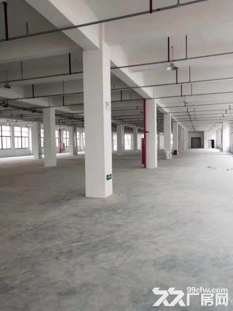 文昌路附近四楼1050㎡,位置好,宜仓库、电商、外贸-图(5)