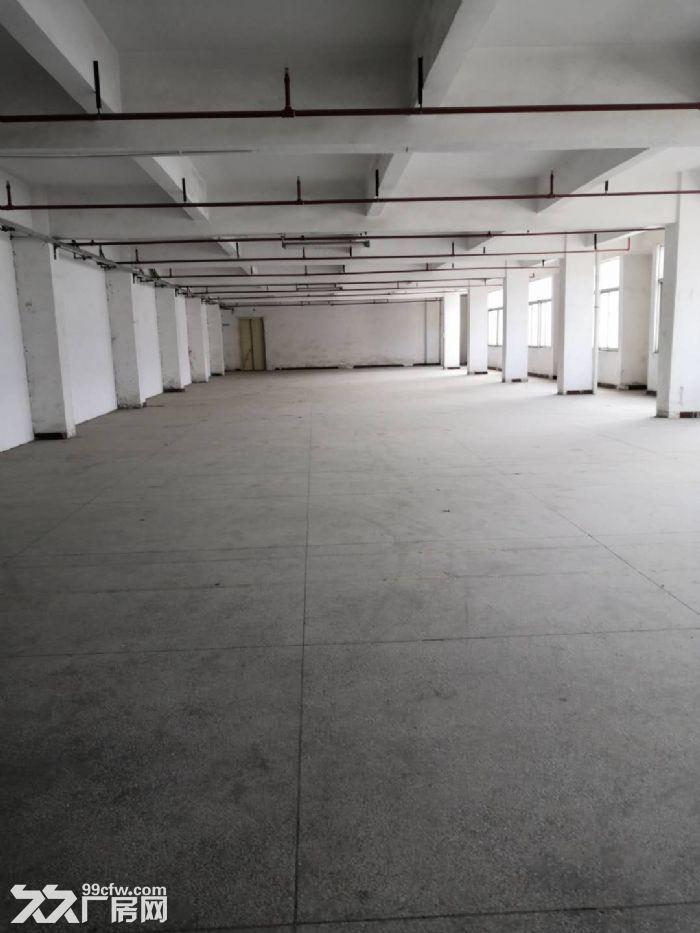 凤岗竹塘仓库包装纸箱纸盒塑胶厂房出租楼上2000平方-图(3)